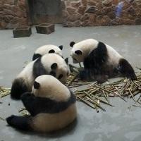 Q_Panda