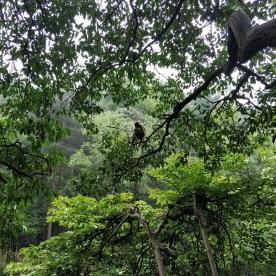 Affen im Park